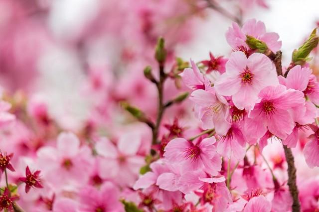 【学生さん必見】春は出会いの季節♪恋のきっかけが見つかる3スポット!